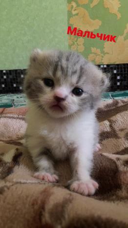 Котята — фотография 1