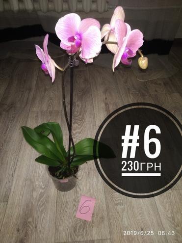 Орхидеи — фотография 1