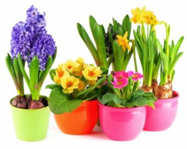 Луковичные и клубневые цветы — фотография 1